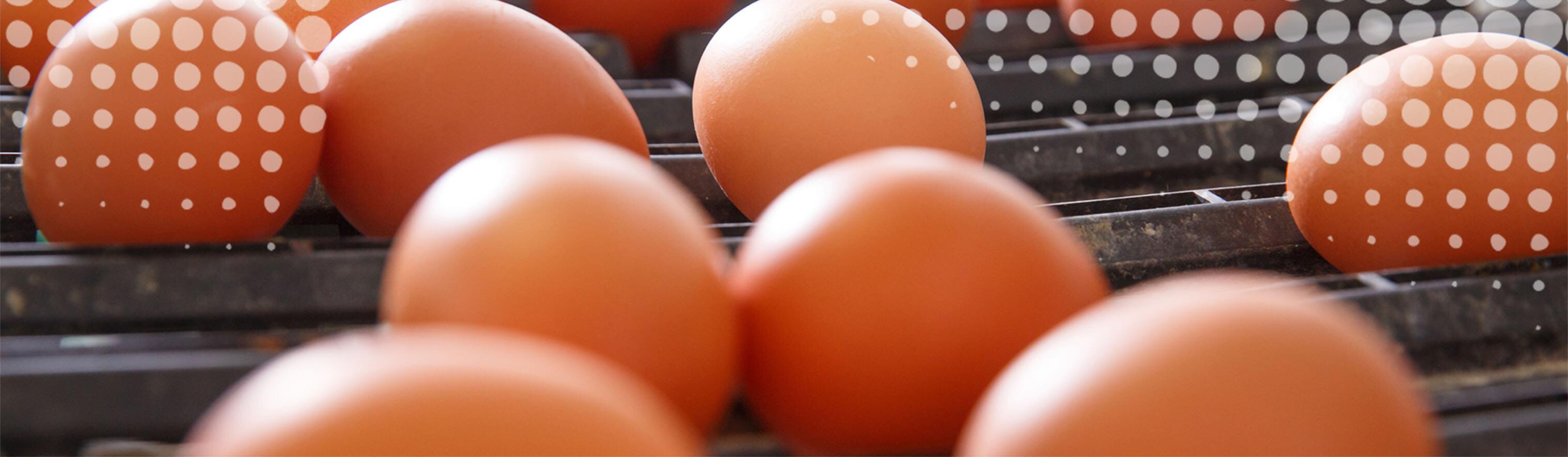 Food Safety Testing Slider - Brown Eggs on Conveyor